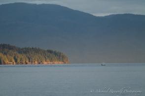 Orca whale at sunrise