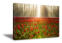 skagit valley tulips canvas print