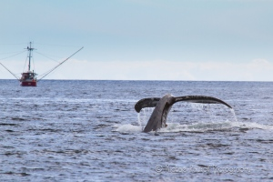whale tail with boat