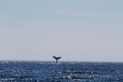 whale tail slap