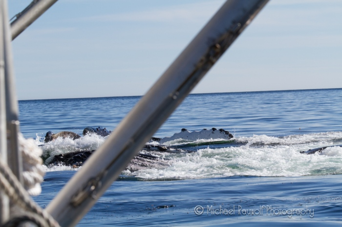 Whales_14