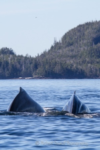 two whales side by side